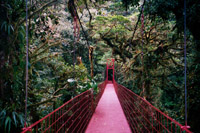 canopy bridge in Monteverde Cloud Forest Reserve