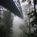 Monteverde cloud forest bridge
